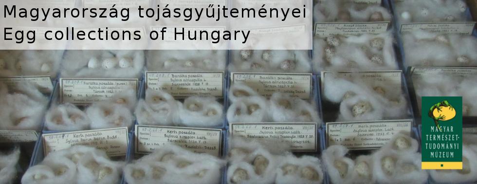 Magyarország tojásgyűjteményei / Egg collections of Hungarys